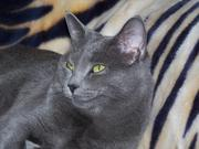 Robin (My Cat) Needs A Loving Home - (No Purchasing Cost)