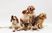 Ottawa pet sitting for your lovely pets.